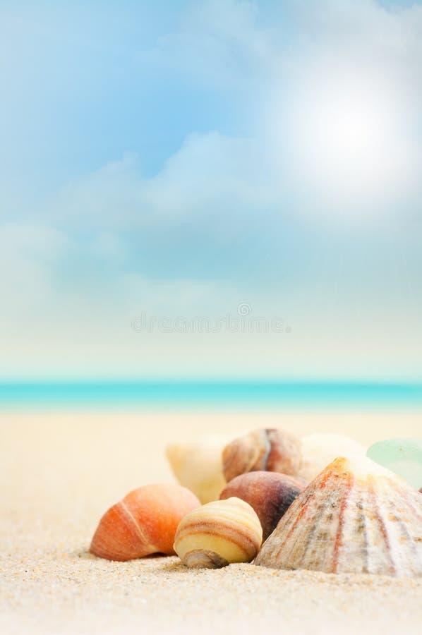 Playa y cáscaras francesas - ascendente cercano imagen de archivo