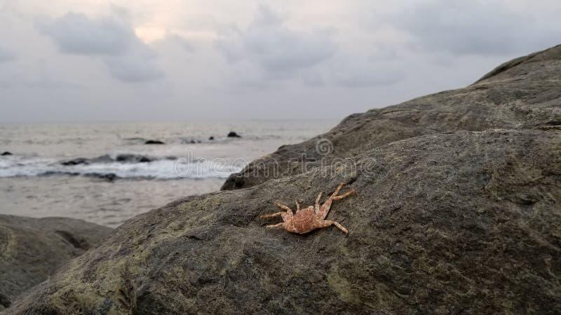 Playa y cangrejo en Kribi el Camerún fotografía de archivo libre de regalías