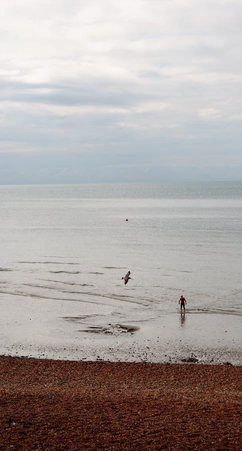 Playa y embarcadero de Brighton Nadador y gaviota imagen de archivo