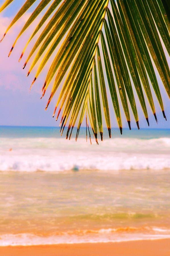 Playa y palmas tropicales foto de archivo libre de regalías