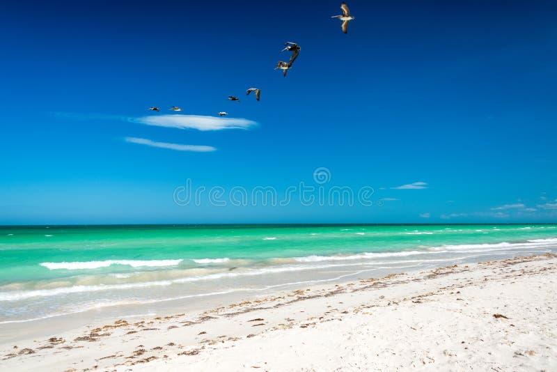 Playa y pelícanos imagen de archivo libre de regalías