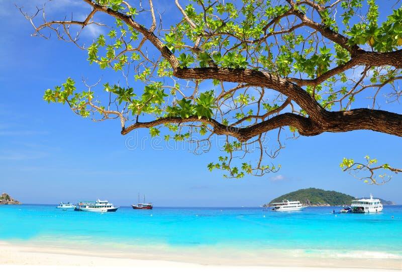 Playa y rama hermosas del árbol en la isla de Similan, TAILANDIA fotografía de archivo