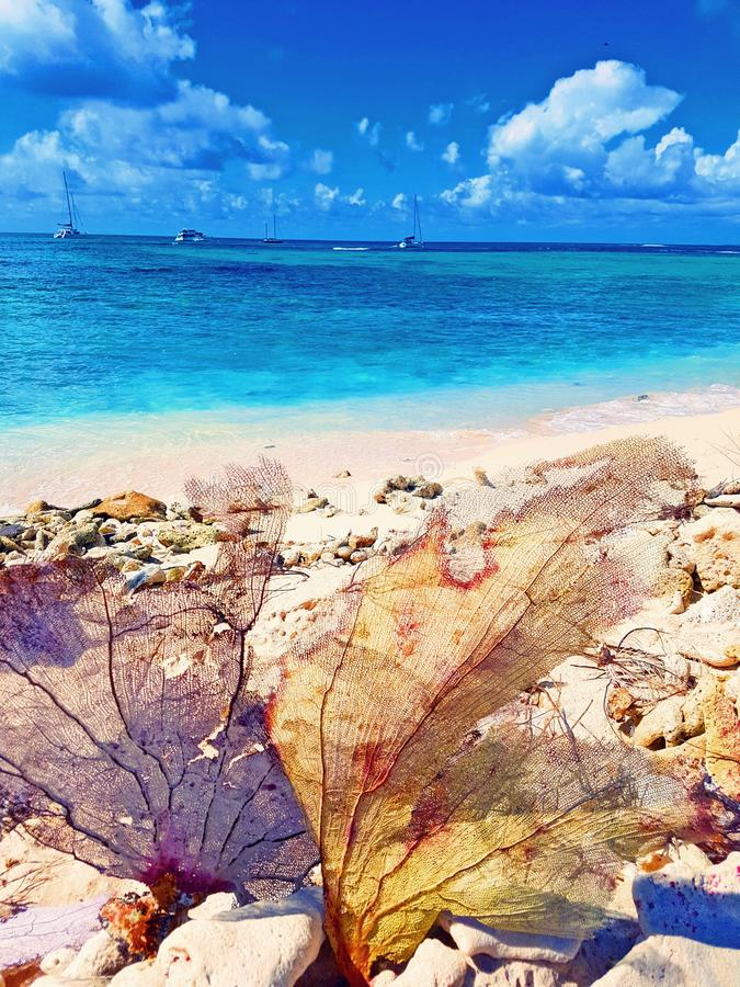 Playas arenosas blancas en St Maarten foto de archivo