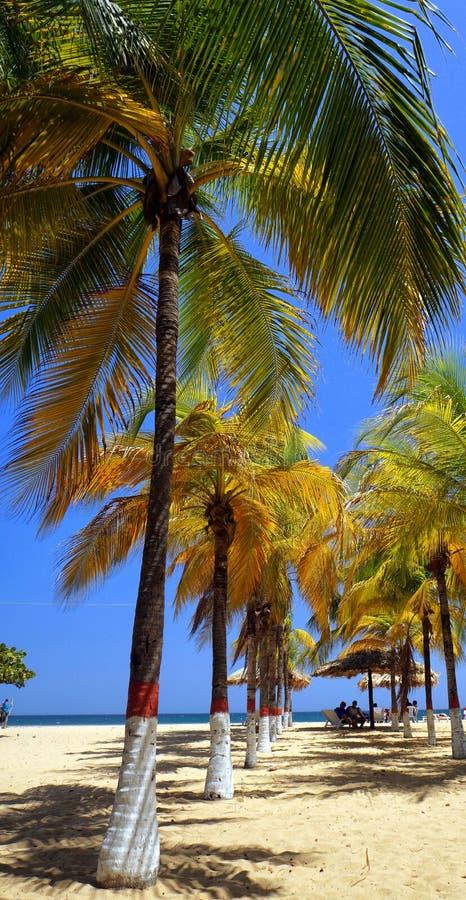 Playas del Caribe fotografía de archivo