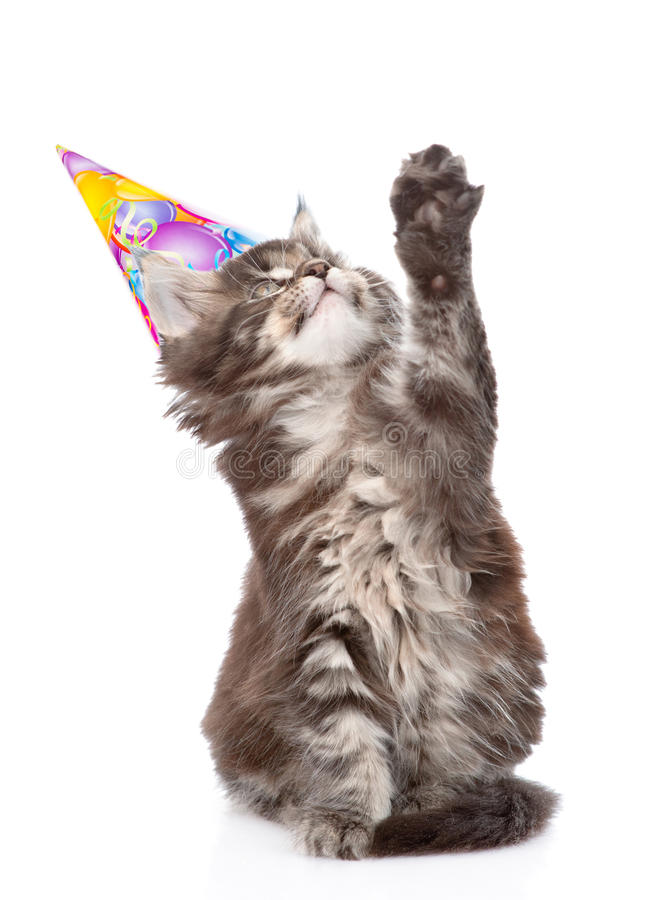 Playful cat with birthday hat looking up. isolated on white. Background royalty free stock photos