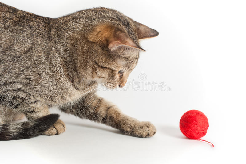 Playful Cat With Clew Royalty Free Stock Photography