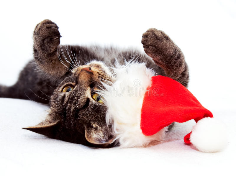 Playful Christmas Cat. Christmas playful cat lying on the back with red Santa Claus cap near by royalty free stock photos