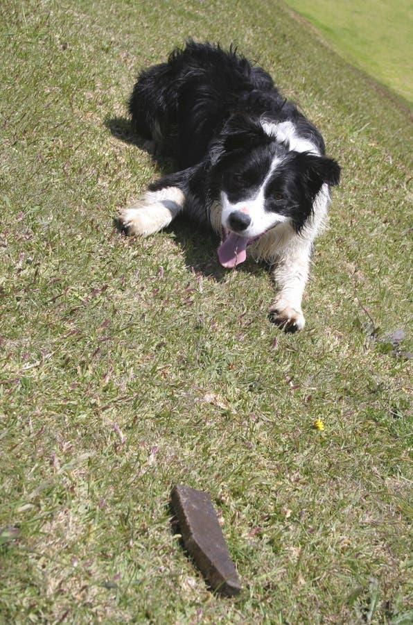Download Playful Dog stock photo. Image of grass, stick, mammal - 8833214