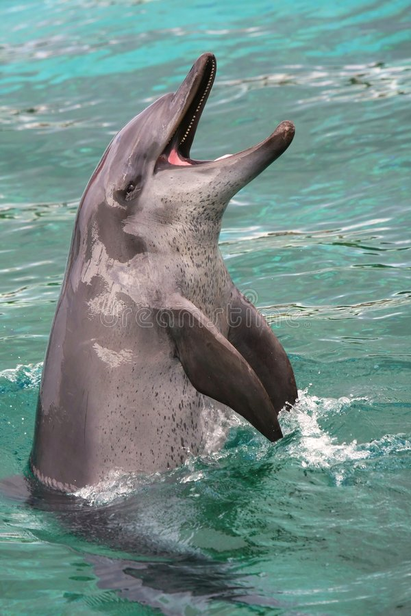 Playful Dolphin royalty free stock images