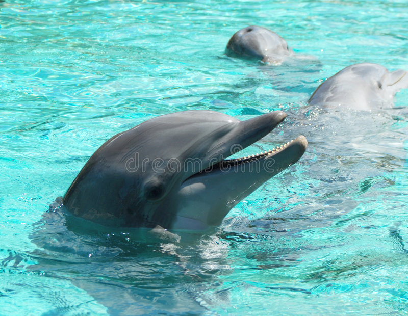 Playful Dolphins royalty free stock images