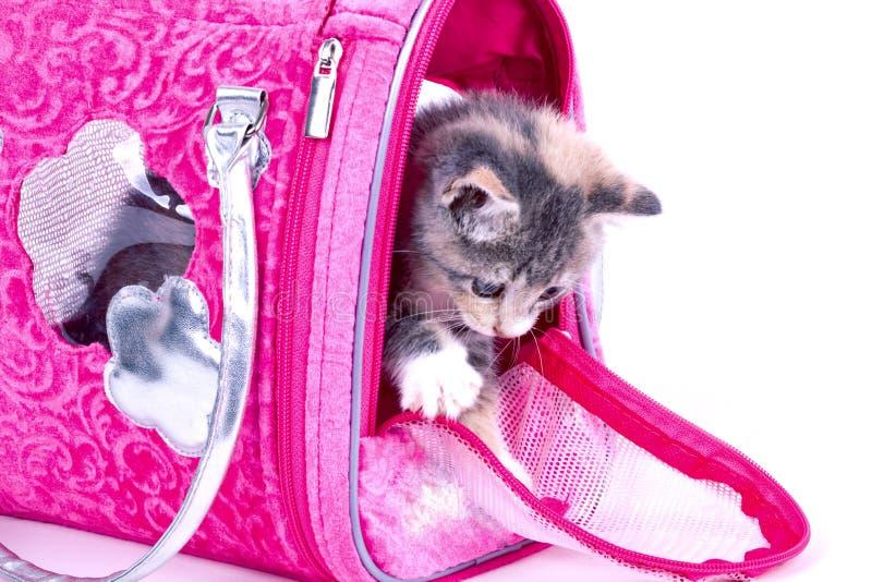 Playful kitten. stock photo