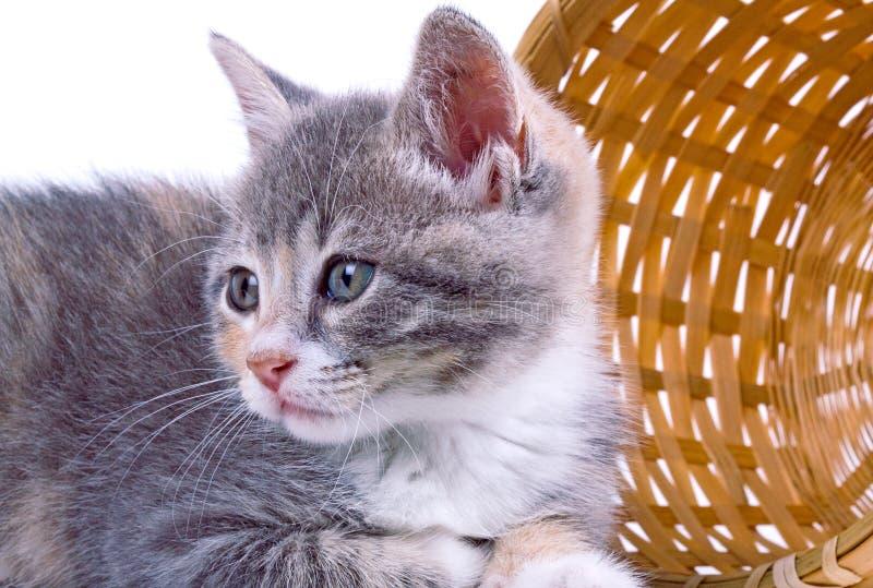 Playful kitten. royalty free stock photos
