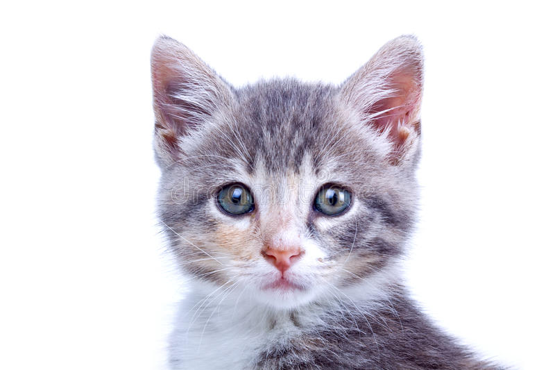 Playful kitten. royalty free stock images