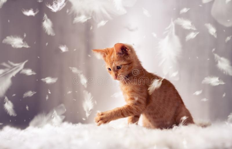 Playful kitten in feathers stock image