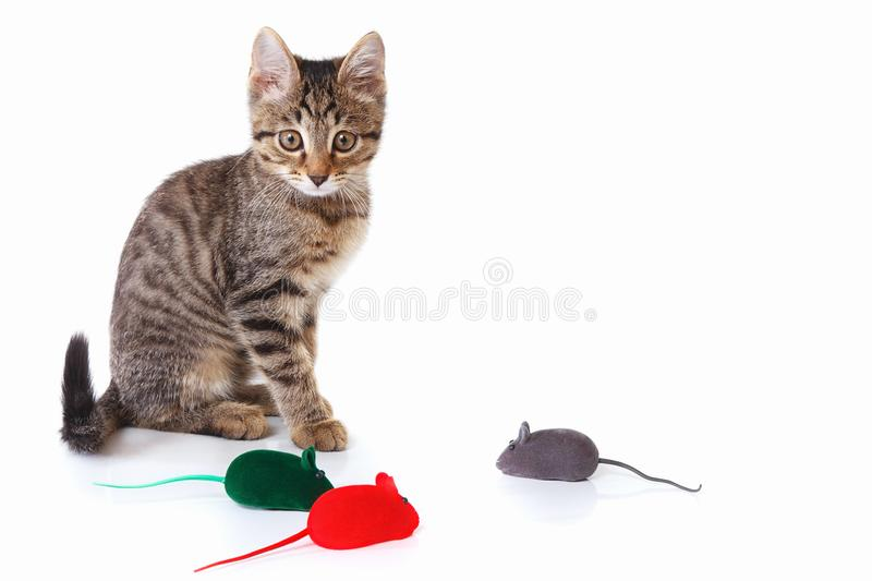 Playful kitten is played with a red, gray and green toy mice on white background stock image
