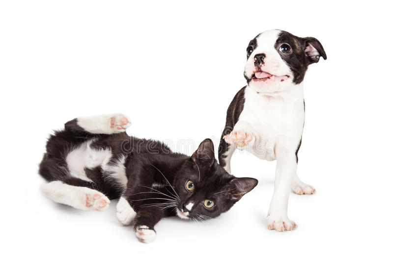 Playful Kitten And Puppy Playing Stock Image - Image of ...