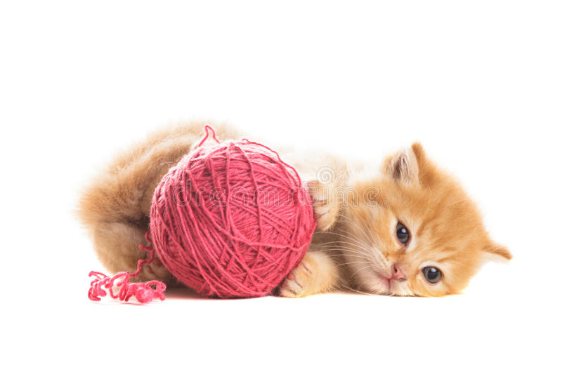 Playful kitten royalty free stock photos