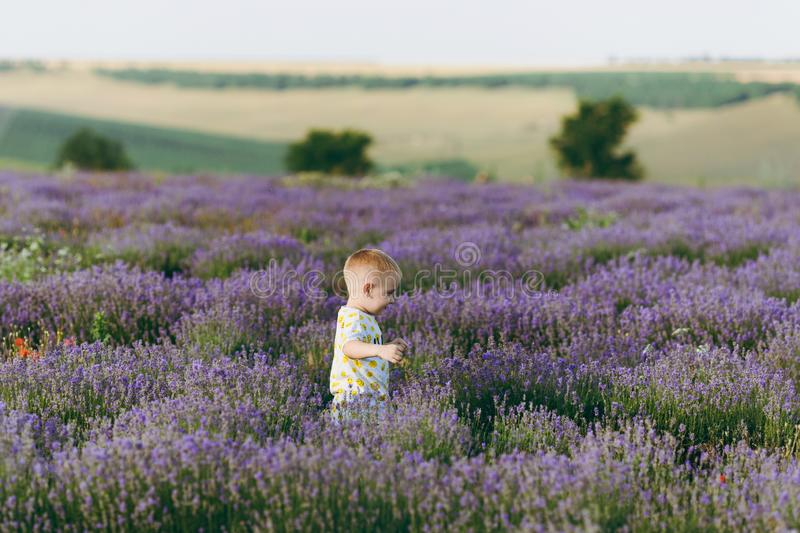 Playful little cute child baby boy walk on purple lavender flower meadow field background, run, have fun, play, enjoy royalty free stock photography