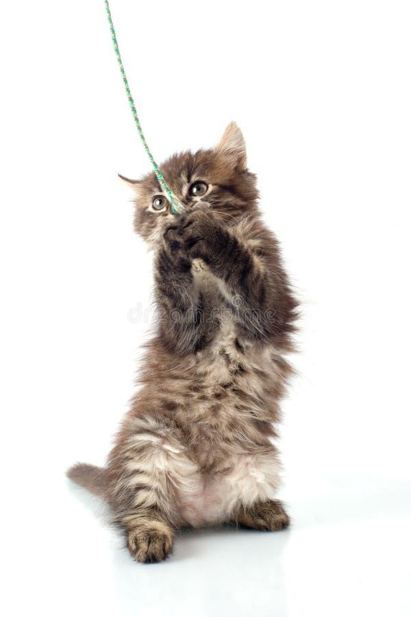 Playful little kitty stock photos
