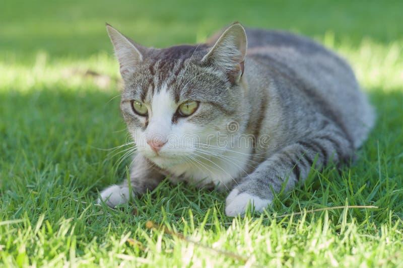 Cat in garden royalty free stock photos