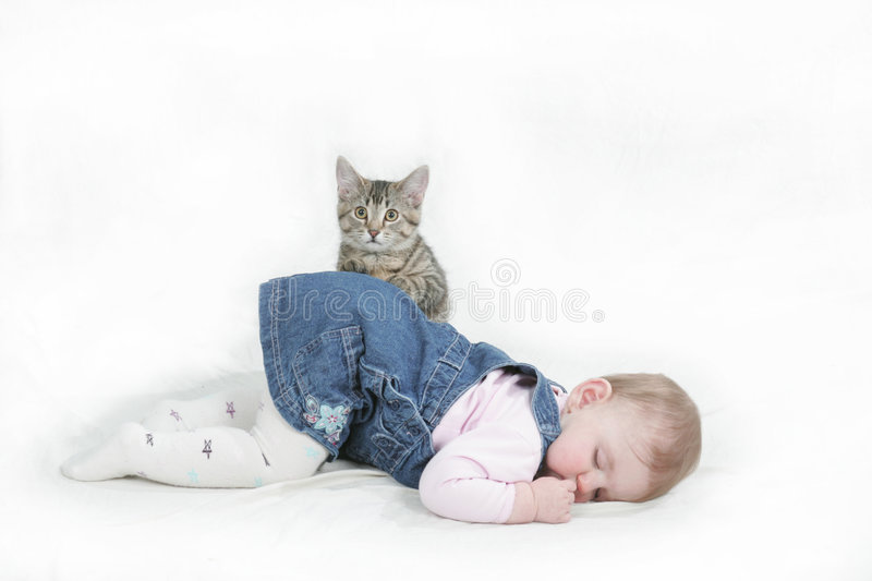 Playfull kitten. Never known this kitten to cooperate with me the way he did at this model shoot stock image