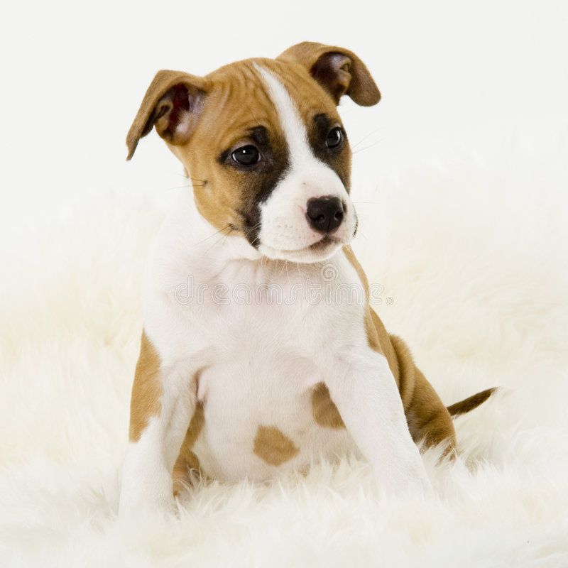 Playfull puppy royalty free stock photos