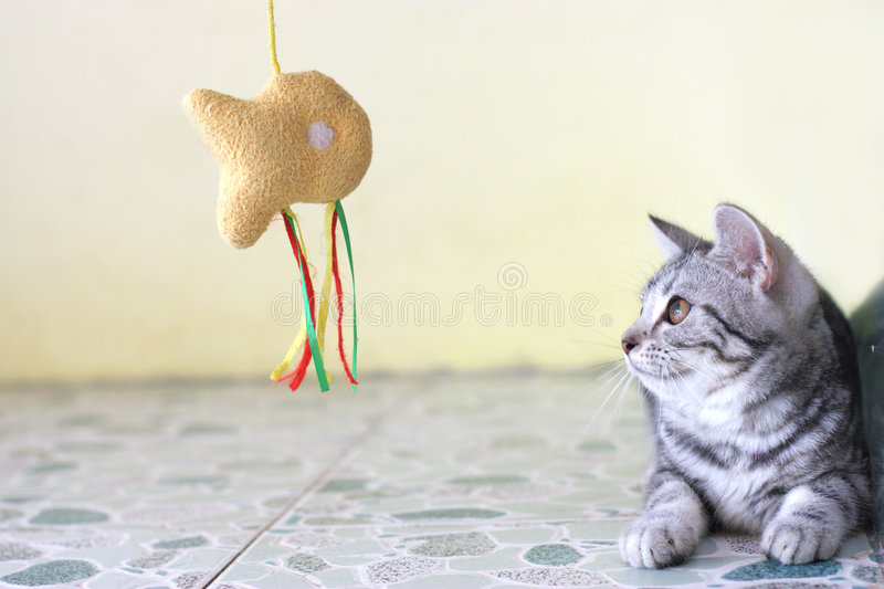 Playing cat stock image