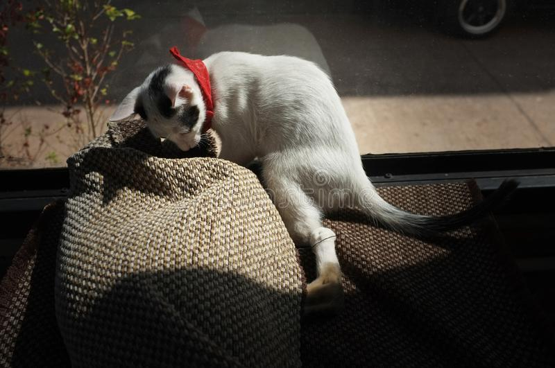 Playing the cute cat in the carpet.  stock photography