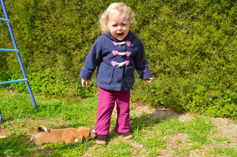 Girl crying when playing with dog. Girl is crying when playing with the dog in the garden. The dog is pulling het trousers royalty free stock photos
