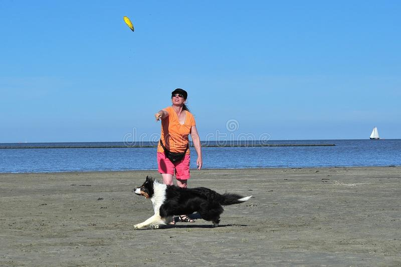 Download Playing Frisbee With Australian Shepherd Royalty Free Stock Photo - Image: 32720075