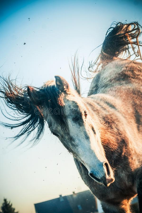 Front Horse Stock Images - Download 12,065 Royalty Free Photos