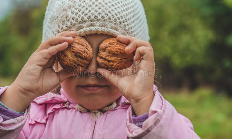 Playing outdoors cute little girl holding a nuts in front of her. Nuts harvests. Autumn in the garden, the girl and large nuts royalty free stock image