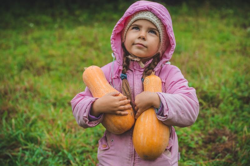 Playing outdoors cute little girl holding a pumpkin. Harvest of pumpkins, autumn in the garden, the lovely girl and large pumpkins royalty free stock images