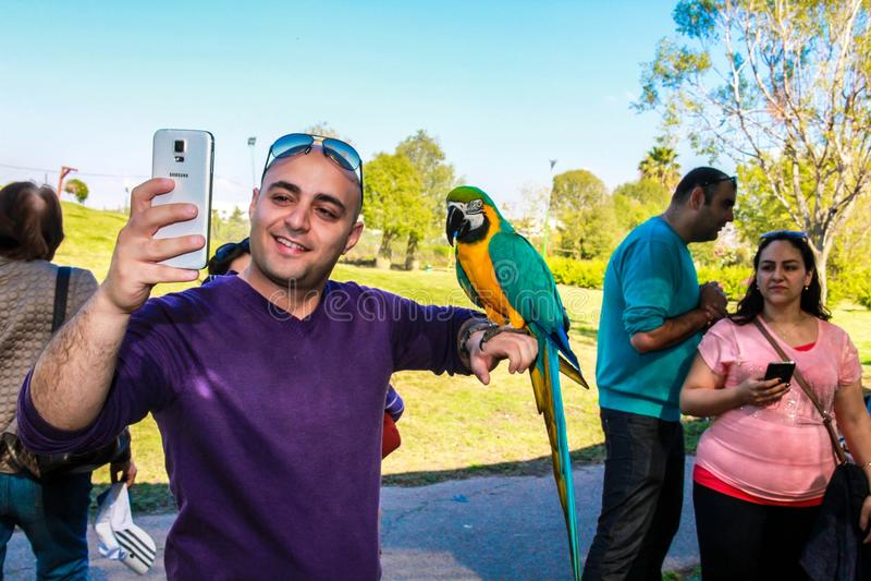Playing with parrot macaws ( Ara ararauna) stock photography