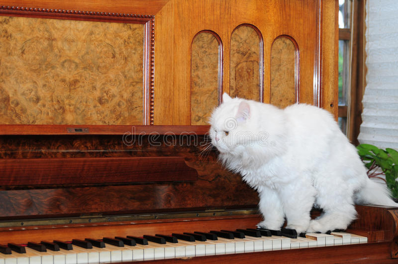 Download Playing piano stock photo. Image of object, strings, fashioned - 12064546