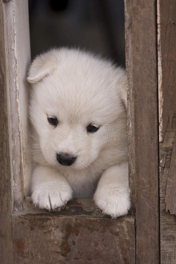 Download Playing Puppy Stock Image - Image: 9737591