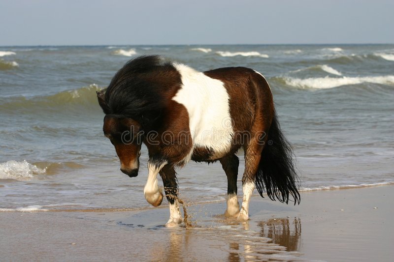 Download Playing with water stock image. Image of full, piebald - 1389151