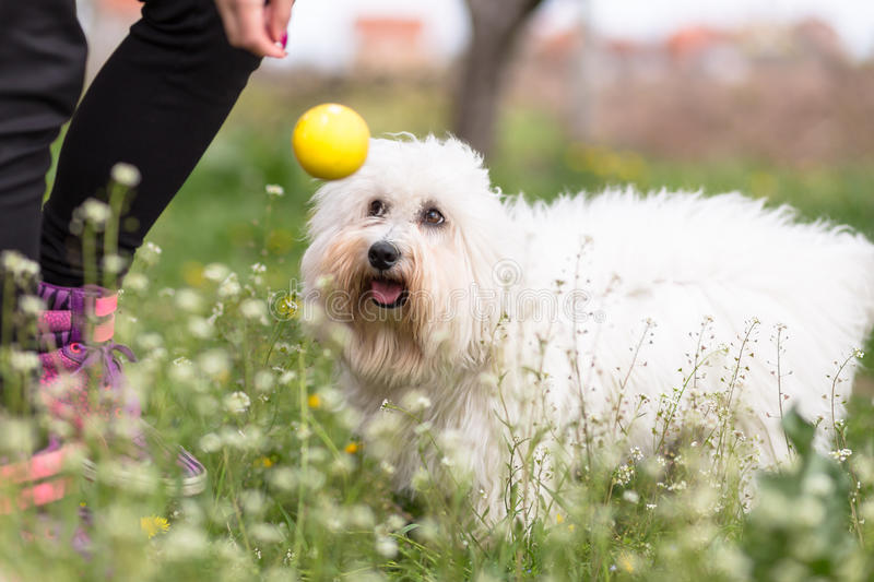 Playing with your dog stock images