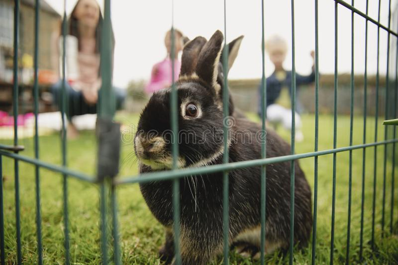 Playtime With Cute Rabbit stock photography