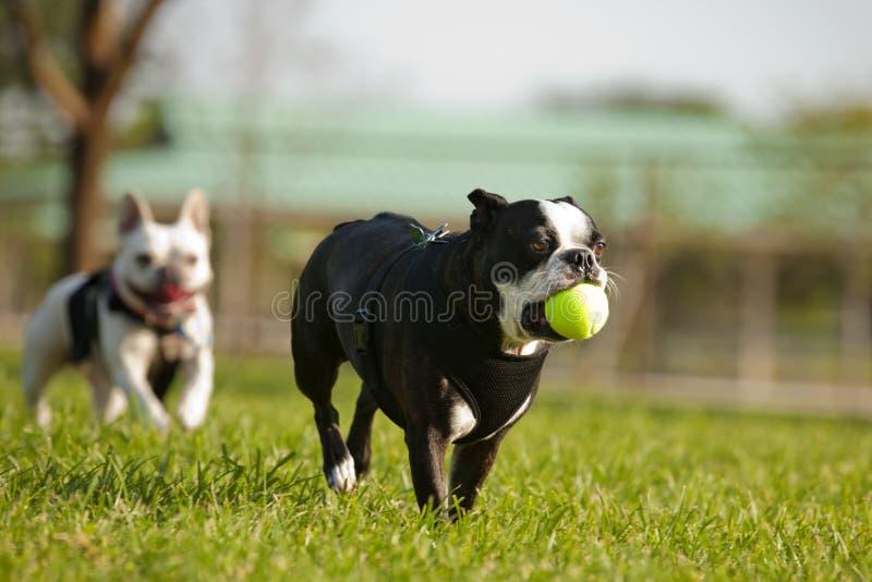 Playtime del cagnolino immagine stock