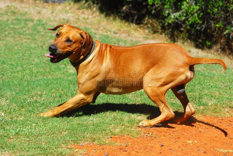 playtime doggy стоковые изображения rf