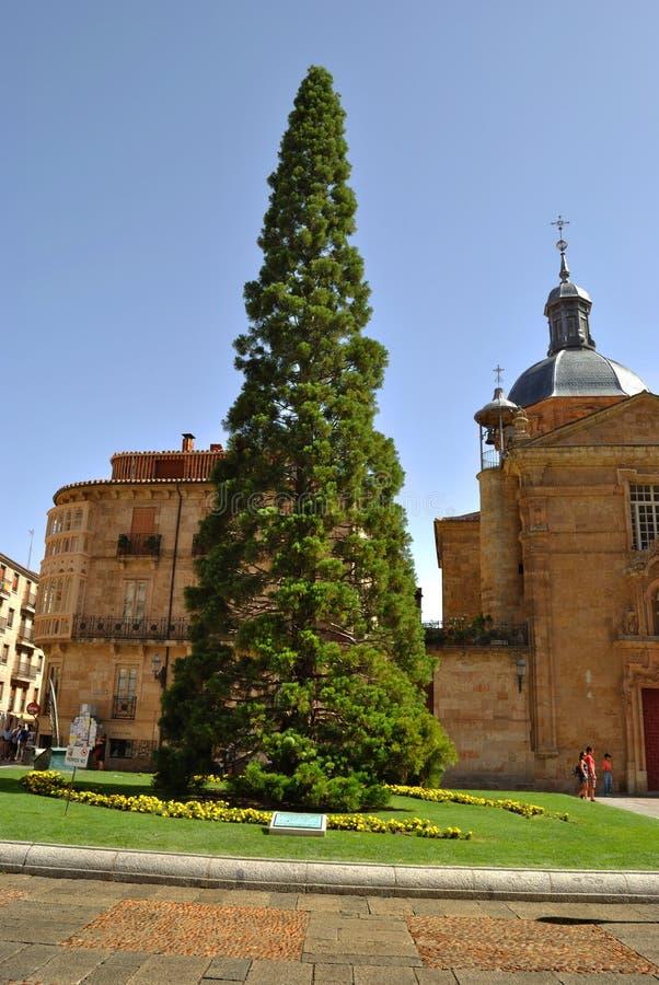 Download Plaza De Los Anaya In Salamanca Stock Image - Image: 26293781