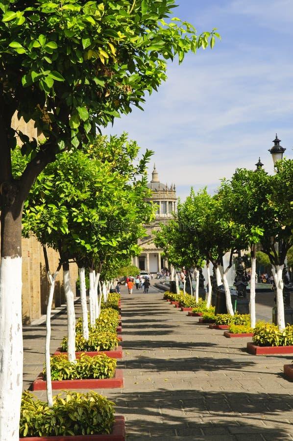 Free Plaza Tapatia Leading To Hospicio Cabanas Royalty Free Stock Images - 13254459