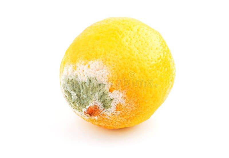 Pleśniejąca cytryna na bielu zdjęcia stock