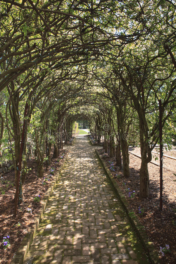Pleached Allee Glen Burnie Gardens Winchester VA. A pleached allee in the Glen Burnie Gardens in Winchester Virginia where crabapple trees are planted in lines royalty free stock image