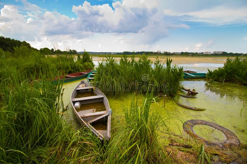 Pleasant rural landscape with little old wooden craft fishing boats or punts at a lake shore in rich green grass and bulrush royalty free stock photo