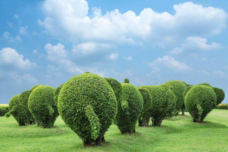Plecy słonia drzewo fotografia royalty free