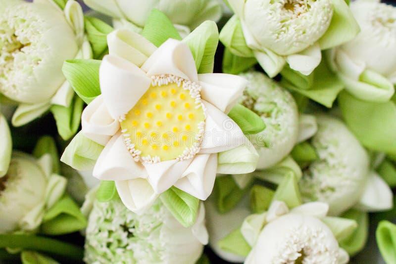 Plegamiento de la flor de loto blanco. imagen de archivo