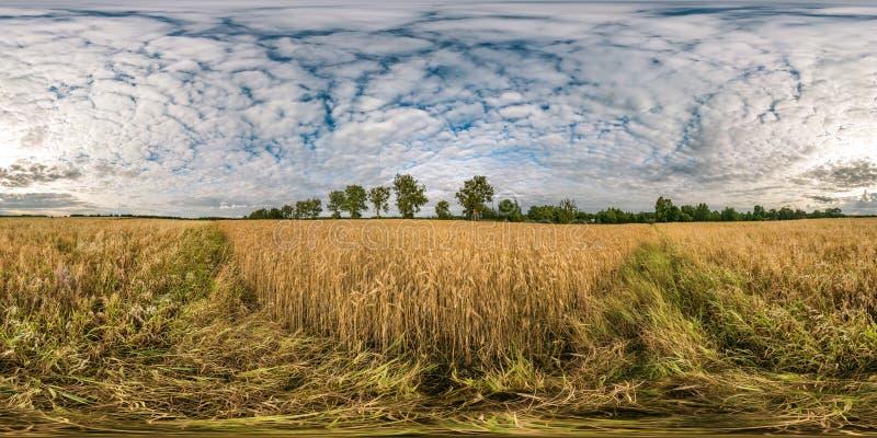 Plein panorama sphérique sans couture de hdri 360 degrés de vue d'angle parmi des champs de seigle et de blé dans le jour d'été a images libres de droits