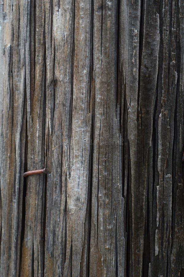 Plein téléphone Polonais de cadre photographie stock
